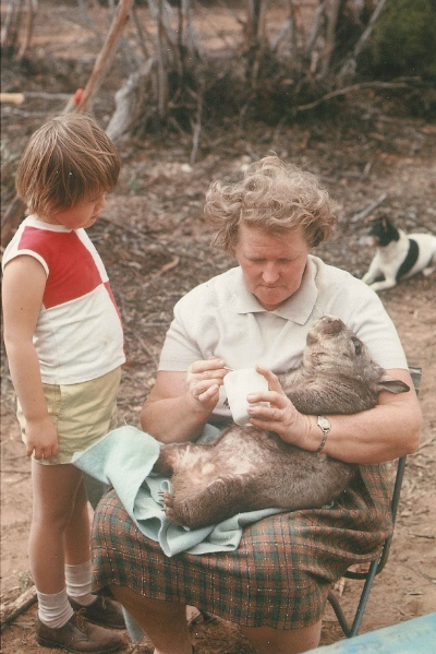 Peg Conquest giving a drink to a caught wombat on Portee, May 1968