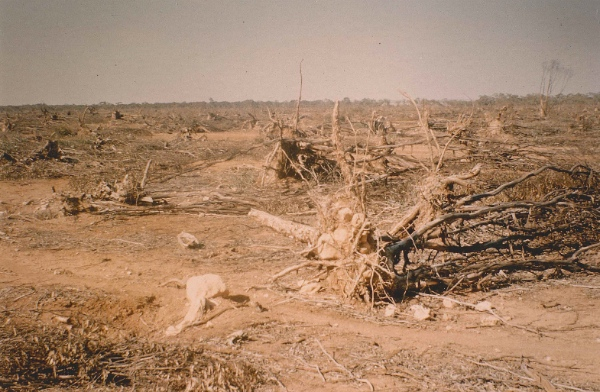Cleared land. The cause of the degradation of the environment. Drought and dust-storms. This is the property joining Portee Station on the western boundary, 1967