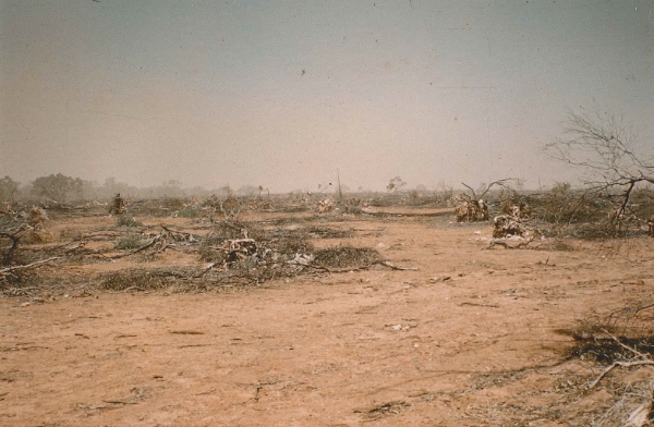 Cleared land. A further view of clearing of the Mallee in a 250mm rainfall area, 1967